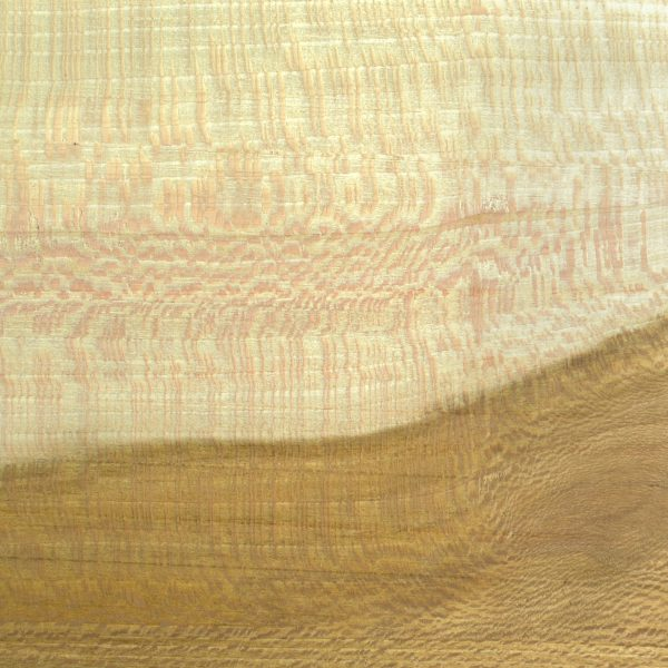 Quarter Sawn Sycamore wood grain close up