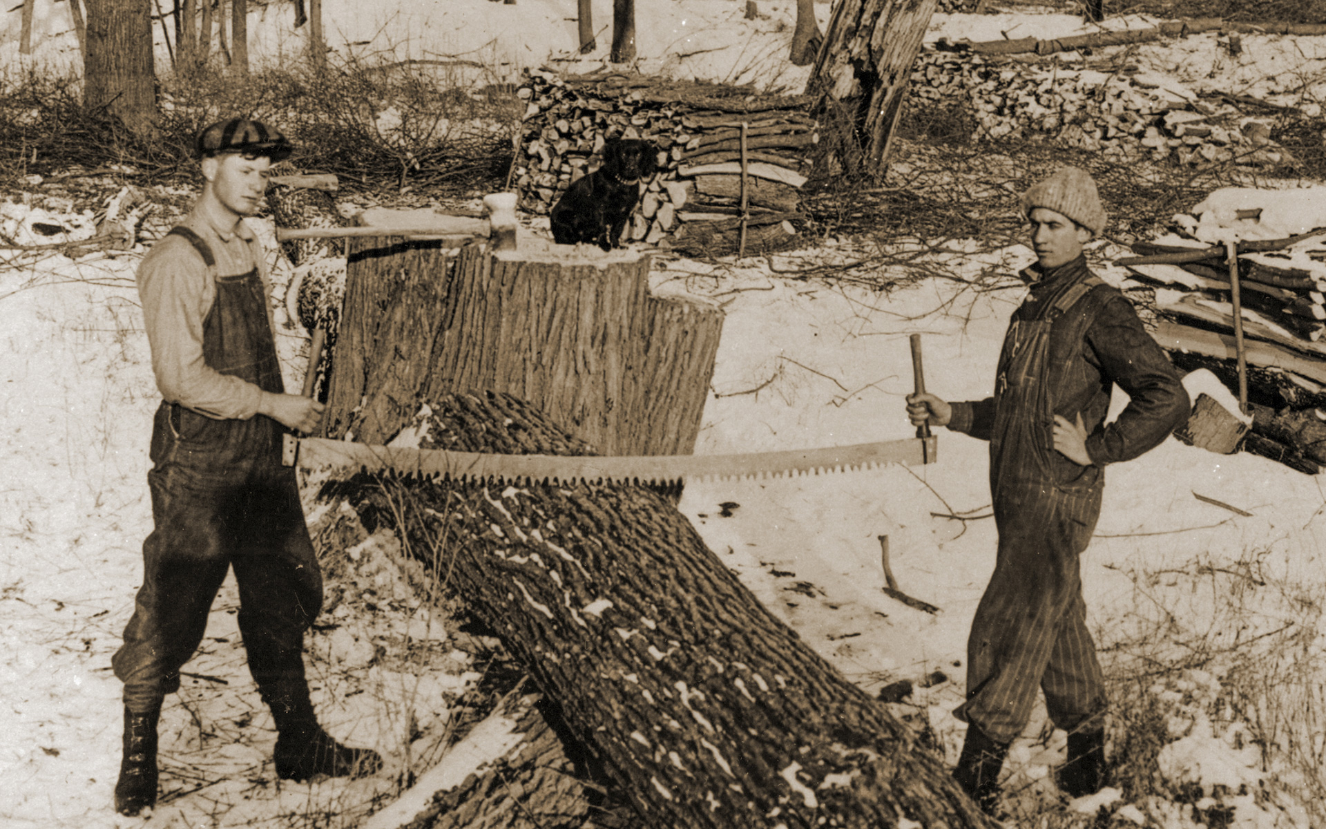 Historic Photo of Amana Forestry cutting a tree with a Two-Man Crosscut Saw