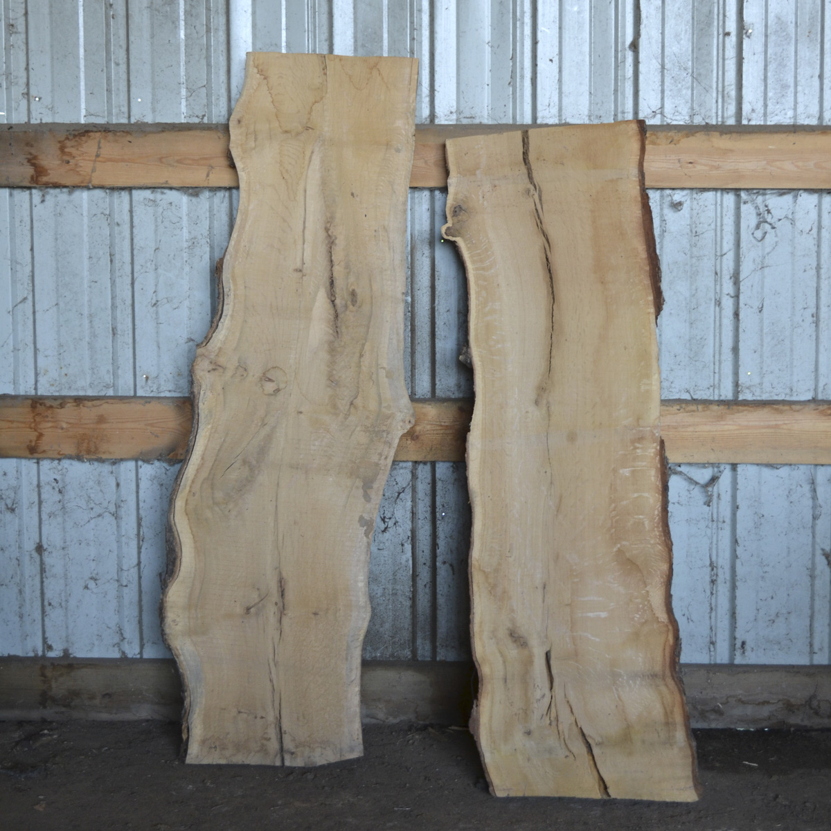 Buy Live Edge White Oak Slab » Amana Forestry Service In