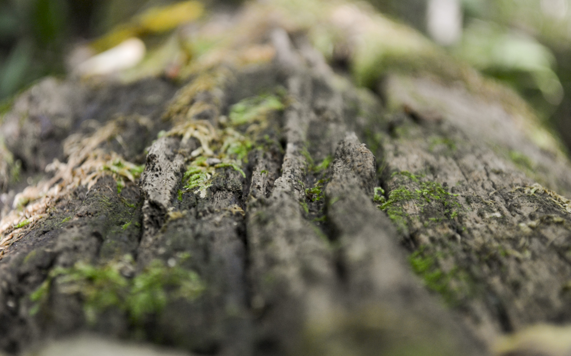 Tree Bark on tree with a little green moss an Amana Forestry photo