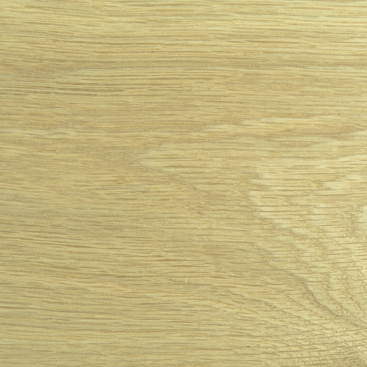 White Oak Wood (close up of wood grain)